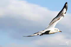 Seabird (Aamir Jaffar) Tags: trees sea sky food man bird eye girl skyline clouds flying dubai uae eat seabirds tallestbuilding burjkhalifa seantportrate
