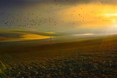 Volo sul Monferrato (AL) -  (Explore #121) (Gianni Armano) Tags: verde alba natura uccelli volo piemonte giallo cielo terre sole rosso azzurro colori prato paesaggio gennaio 2012 alessandria arate campi cuccaromonferrato capolavoronatura
