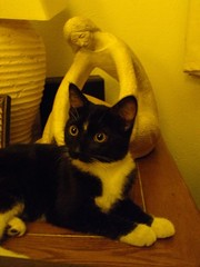 Tessa at 5 Months (Callisto_Star) Tags: pet cats animal cat kitty kitties