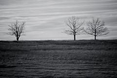 Big Meadows trees (Xiphoid8) Tags: blackandwhite bw mountains tree field forest woods bluemountains shenandoah blueridgemountains blueridgeparkway blueridge bigmeadows backwoods skylinedrive shenandoahnationalpark blackwhitephotos blueridgeva blueridgeparkwayvirginia bigmeadowsvirginia bigmeadowsskylinedrive
