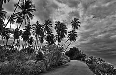 A road by the sea, Barbados