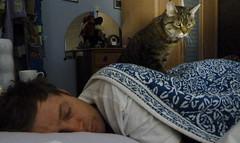 sentinel (estherase) Tags: emssimp findleastinteresting faved jon noj nojjohnson friend lettice cat sleep sleeping asleep myfaves friends