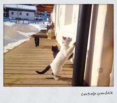 Ispezione grondaia (fratella) Tags: winter italy snow animal italia hiver neve neige inverno alto animale italie adige suedtirol gsiesertal provinciadibz valledicases