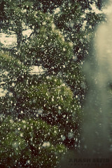 Spring Snow (Arash Sefid) Tags: new snow iran year newyear arash mashhad norooz sefid 1393 24120 d700 arashsefid