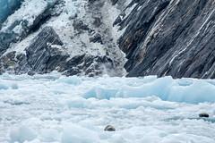 _MG_5054a (markbyzewski) Tags: alaska seal ugly iceberg tracyarm southsawyerglacier