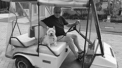 Angus on holiday (Gillian Everett) Tags: cute angus cove westie resort vehicles queensland sanctuary week43 2016 7daysofshooting blackandwhitewednesday