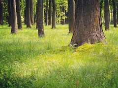 Secret Forest (fru.gru) Tags: world wood tree green grass forest landscape outside spring europe outdoor poland krakow