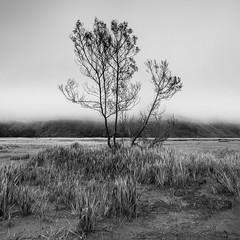 Can you hear my heart beating? (chocoorange) Tags: mist tree grass fog indonesia alone bromo semeru tengger eastjava