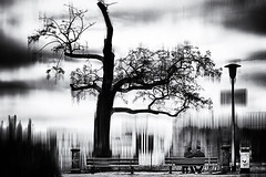 173 (dijopic) Tags: tree art composition person mood view sony fine atmosphere special mistery misterious creativ dijopic