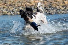FAN_3855.jpg (Flemming Andersen) Tags: dog water seaside zigzag