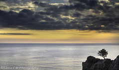 Calm (Snia CM) Tags: old morning sea sky costa naturaleza sun seascape tree nature clouds sunrise mar morninglight rocks fuji cloudy girona fujifilm helios oldlenses helios442 fujixt1