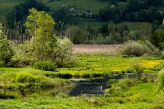 Tourbire de l'Herretang (Sbastien Locatelli) Tags: water saint canon landscape eos is eau chartreuse du pont l usm paysage ef f4 laurent 70200mm 2016 isre tourbire 80d herretang sbastienlocatelli