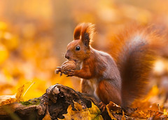 These 20+ Beautiful Autumn Photos Will Inspire You To Grab Your Camera (PhotographyPLUS) Tags: pictures graphics photos illustrations images stockphotos articles footage stockimage freephoto stockphotograph