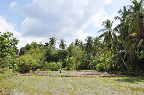 anuradhapura - sri lanka 55