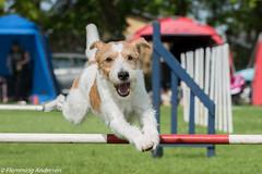 FAN_5994.jpg (Flemming Andersen) Tags: animal denmark outdoor hund agility dk dogsport hundesport sabro centraldenmarkregion dchharlev