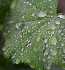 6801c1 (drafiei1) Tags: plant abstract macro reflection texture nature water beauty leaf drops pattern bright bokeh drop depthoffield