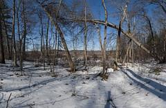 DSC_0124BD80a  Fallen Tree  2016 Paul Light (Paul Light) Tags: trees sky snow landscape massachusetts photomerge concord fallentree greatmeadowsnationalwildliferefuge reallyrightstuffpanokit
