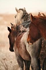 Shelter in Numbers (SomewhereOutside) Tags: horses snow native northdakota somewhereoutside douglasmccartney