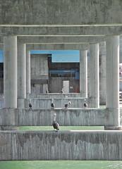 Under the Bridge (**El-Len**) Tags: ocean bridge usa us gulf florida pelican fav10 thegalleryoffinephotography