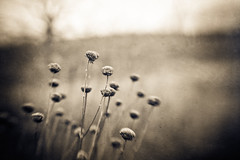"""52:48 """"from the hip"""" [Explore] (stacyvitallo) Tags: texture nature lensbaby canon naturallight rest composer hss hcs leroyoaks 52week thesemoments 5dmarkii fall2011 stacyvitallo slidersunday ihtsw ihavetoshootwhat"""