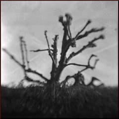Kodak Brownie Hawkeye Flash Lens Flipped expired 96 Ilford PanF Plus Tree (Miles Davis (Smiley)) Tags: camera 120 film kent kodak canterbury roll bakelite ilford expiredfilm bhf panf browniehawkeyeflash 50asa kodakbrowniehawkeyeflash panfplus ct1