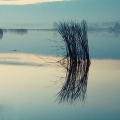 Zen II (warmianaturalnie) Tags: morning blue lake water grass silhouette sunrise mono pond poland polska zen warmia idream
