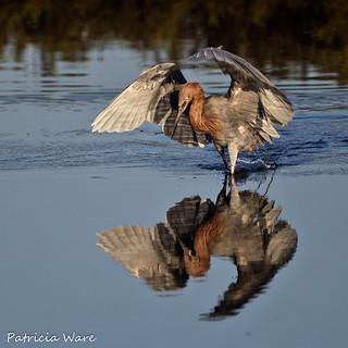 Winging the Hunt