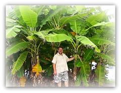 ~~ Hilo, Hawaii # 5 ~~ (TravelsThruTheUniverse) Tags: tropicalplants zengardens hilohawaii tropicalgardens tropicalfoliage thebigislandofhawaii tropicallandscapes