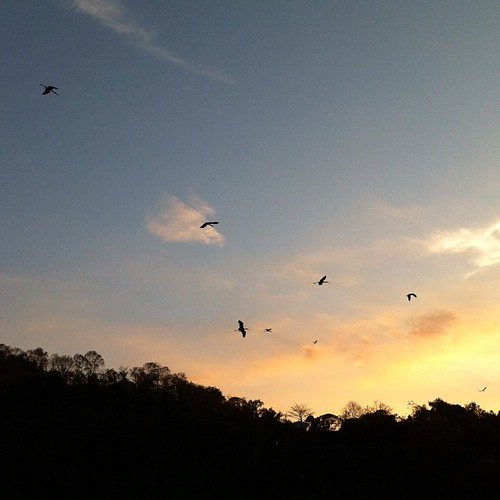 นกกระยางเพียบ