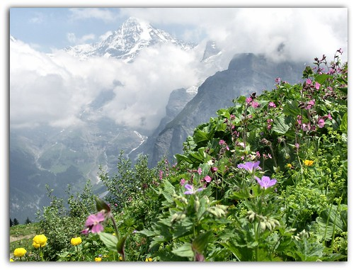 Mountain Flowers and the Eiger