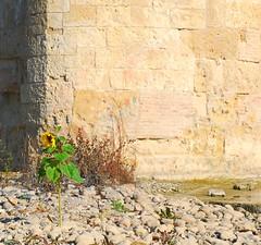 Cordoba, Andalucia: Ponte romano sul Guadalquivir dicembre 2011 807 (tango-) Tags: bridge puente spain bridges ponte espana cordoba puentes andalusia cordova spagna ponti  espain   tiberiofrascari andalucia