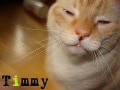 "Timmy • <a style=""font-size:0.8em;"" href=""http://www.flickr.com/photos/73968363@N02/6676920891/"" target=""_blank"">View on Flickr</a>"