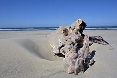 SAND SCULPTURES (DESPITE STRAIGHT LINES) Tags: ocean sky sunlight beach oregon landscape florence sand nikon paradise day pacific dunes dune clear driftwood sculptures utopia sanddunes nikond700 ilobsterit
