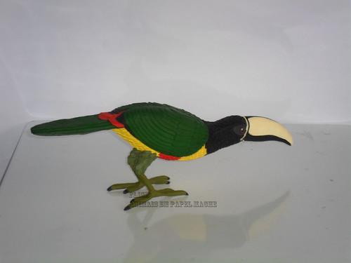 Pteroglossus aracari aracari (3)