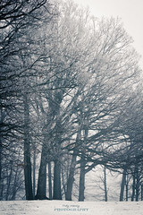 Winter (TroyMarcyPhotography.com) Tags: trees winter ice illinois normal bloomington mclean 70200f4l moraineviewstatepark canont2i foggycoldafternoonwwwtroymarcyphotographycomfoggycoldafternoonwwwtroymarcyphotographycom