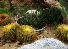 Fear not the thorns / No temas las espinas (Claudio.Ar) Tags: cactus naturaleza color nature argentina zoo buenosaires sony dsc h9 temaiken claudioar claudiomufarrege