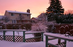 Sunrise After A Snow Storm (bigbrowneyez) Tags: trees houses winter snow beautiful sunrise fence wonderful garden landscape soft dof snowstorm january earlymorning birdfeeder neighbors pinksky mybackyard shrubs earlyriser mydeck pinkglow mygearandme
