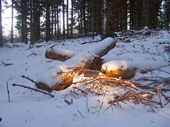 Wärme im Winterwald (marion streich) Tags: wood schnee snow fichten winterwald diejahreszeiten handselectedphotographs naturesceneryandwildlife darknessgoldensun schattenundsonne