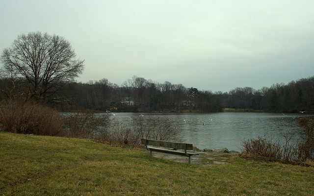 Buddy Attick Lake, overcast: Feb 12