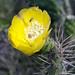 Flora della provincia di Ayacucho