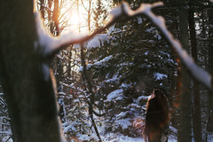 (Anne Mortensen) Tags: portrait sun snow tree girl denmark woods forrest flare annemortensen
