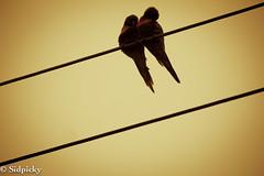 Cuddly birds…
