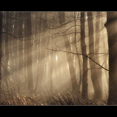 Fog + Trees + Light (Samantha Nicol Art Photography) Tags: trees light mist art grass fog scotland woods nikon warm forrest branches rays samantha beams nicol