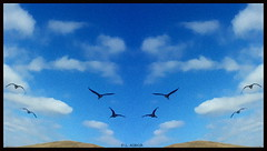 Heading for the Hills (dianealdrich - Please read my updated profile) Tags: sky color art clouds skyscape photography geese newjersey cloudy flight gimp bluesky scene photographicart photoart canadagoose digitalphotography fineartphotography geeseinflight bumpmapped dianealdrich dlaldrich simulatedsymmetry headingforthehills