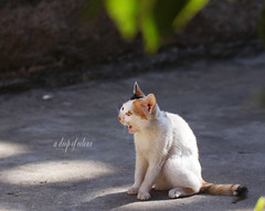 Today's cat 2014.3.26 (ladious666) Tags: life animal cat alive catsplanet