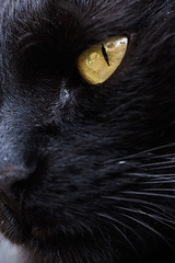 Ner (Matteo Melchior) Tags: pet cats pets animal animals cat gatto nero gatti animaledomestico animalidomestici