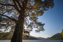 Big tree (GDDigitalArt) Tags: nature sunshine rural scotland daylight outdoor hiking benlomond lochlomond