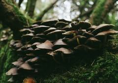 (esmhs) Tags: trees macro green nature forest mushrooms moss woods shrooms