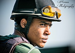 Fernando (EASY GOER) Tags: park horses horse sports belmont racing races thoroughbred equine