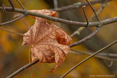 Autumn's End (JSB PHOTOGRAPHS) Tags: autumn leaf branch bokeh branches 2011
